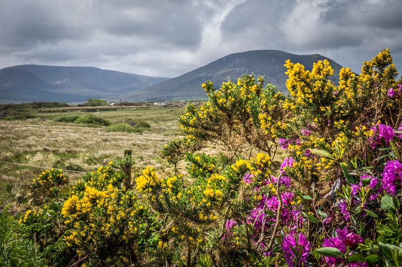 Bog fields in Claggan, County Mayo