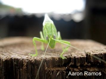 Insecto verde en un tronco.