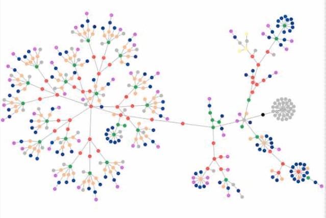 Network flower diagram