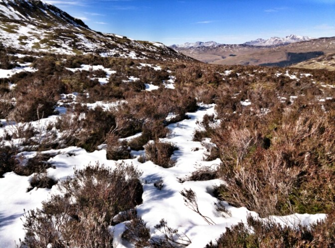 Snow-covered heather