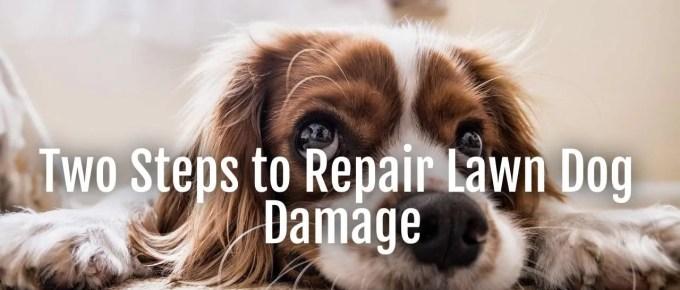 lawn dog damage