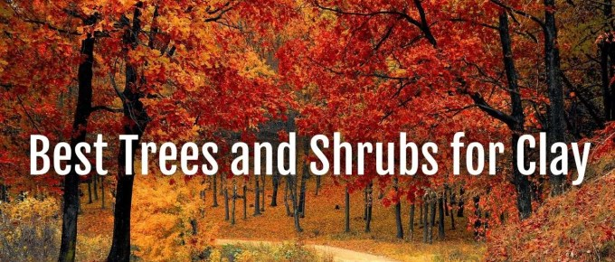 trees shrubs for clay