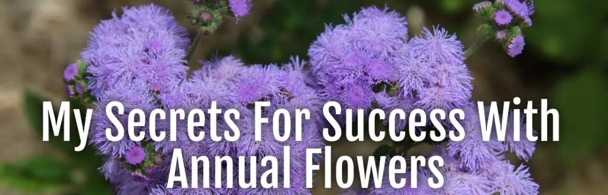 secrets annual flowers