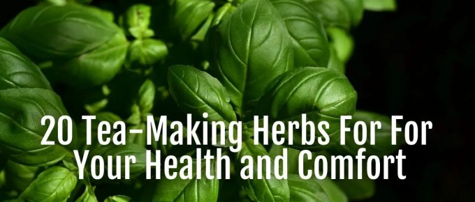 tea making herbs