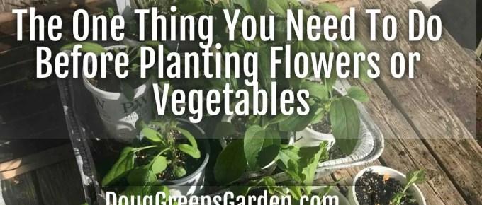 hardening plants off