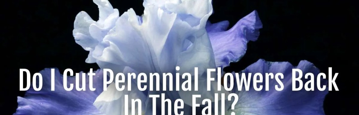 cut perennials back fall