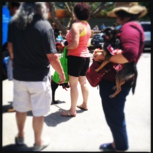 dog in line