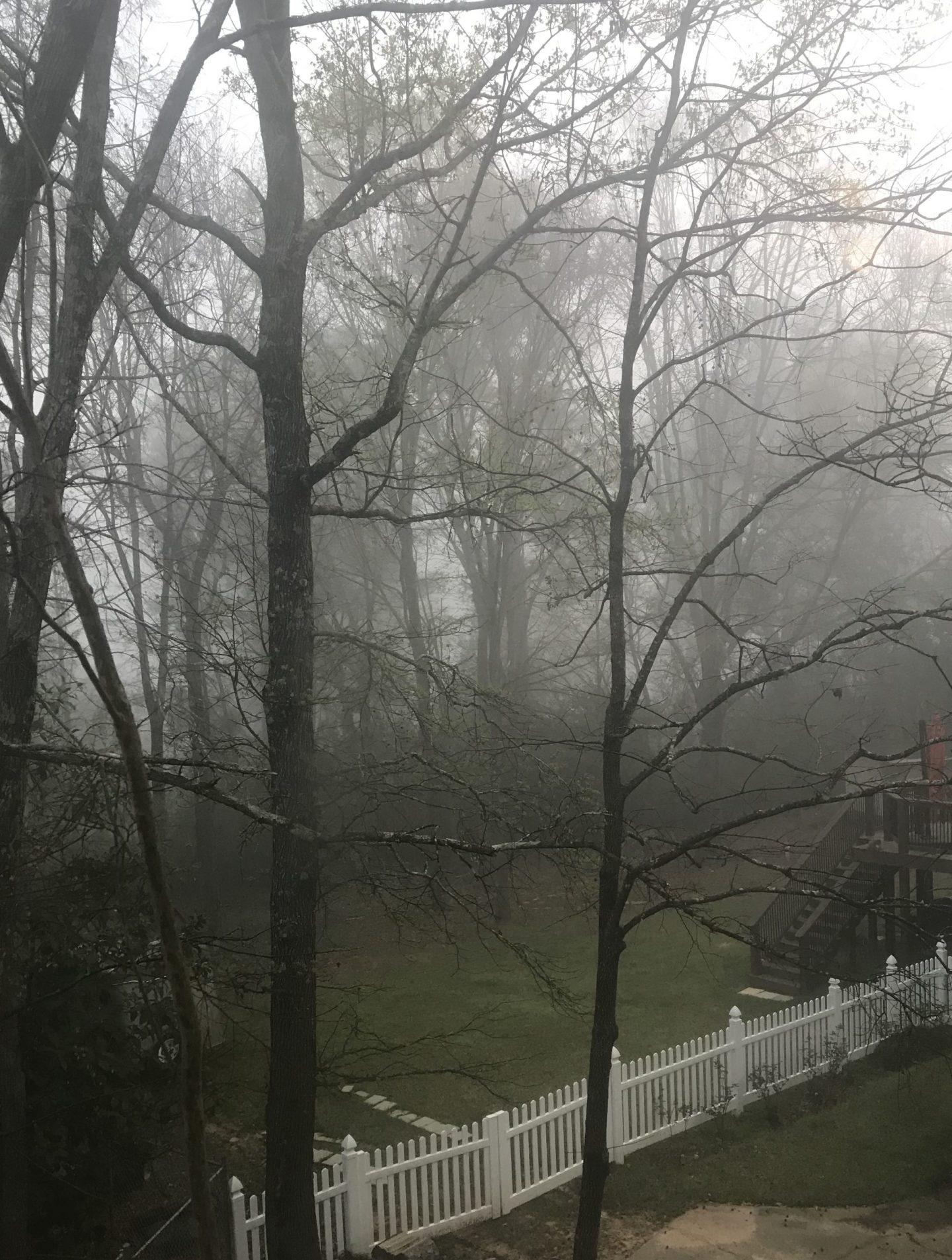 misty tree scape