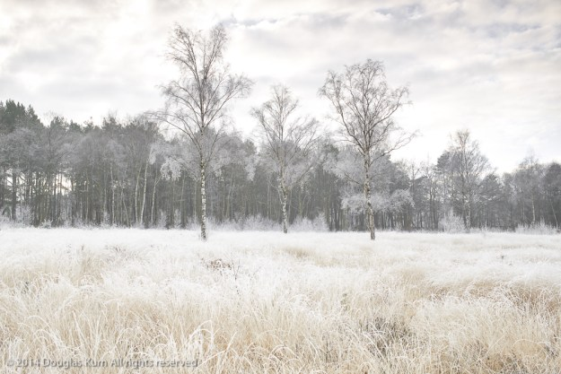 Horsell Common 3
