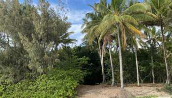 littoral forest along four mile beach