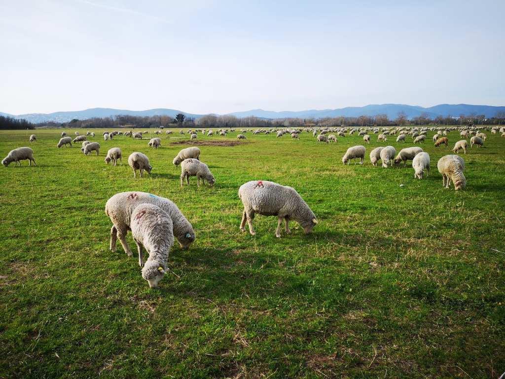 regenerative grazing
