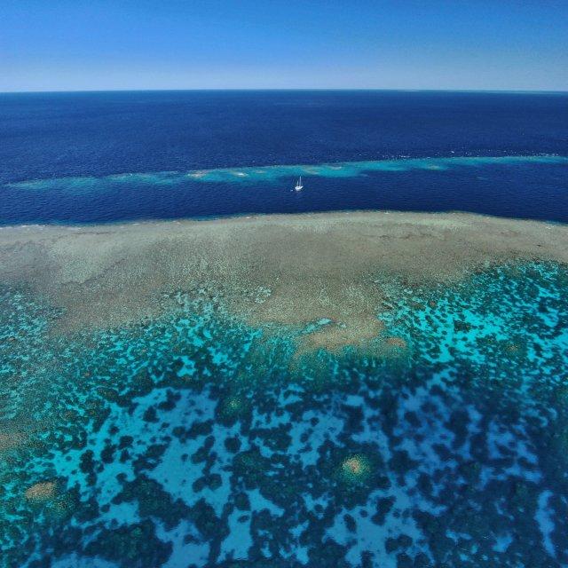 reef documentary