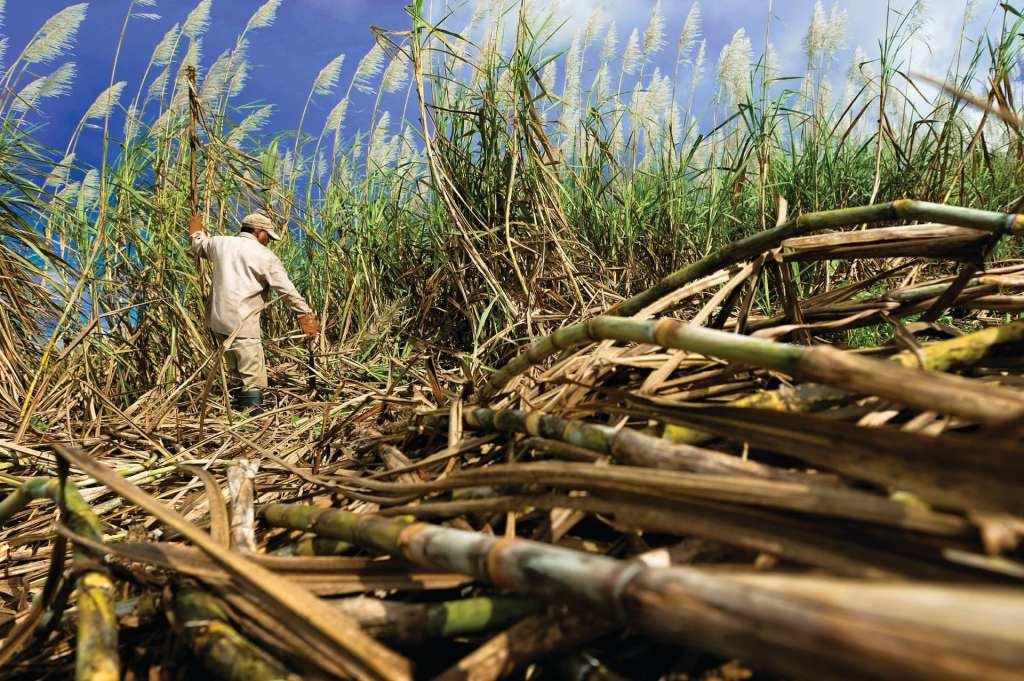 cane season 2021 mossman