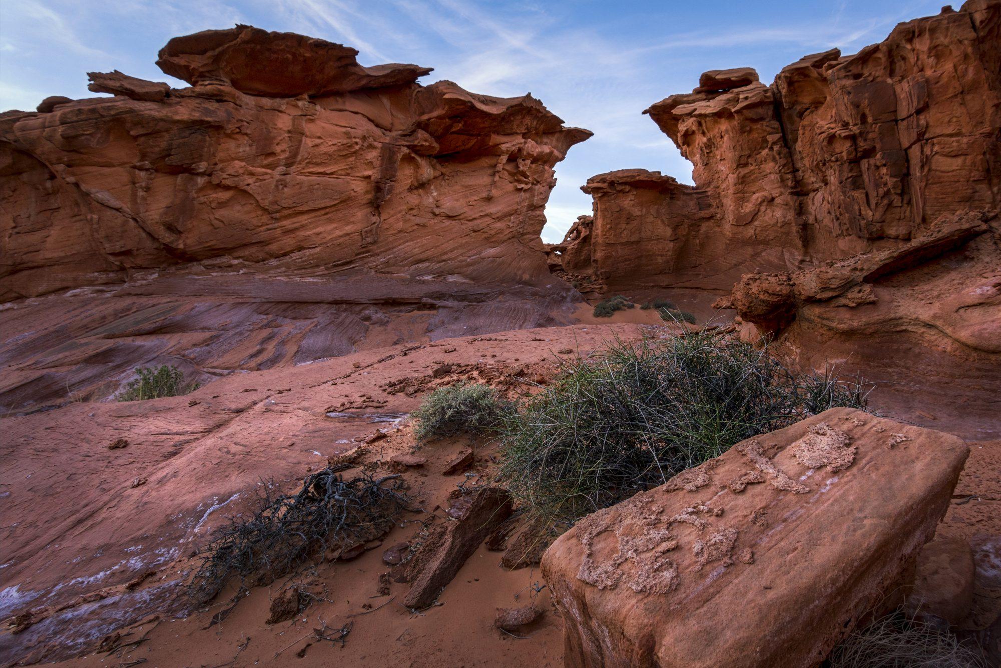 Gargoyles in the Desert