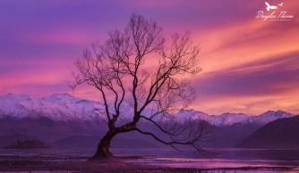 Wanaka Sunrise