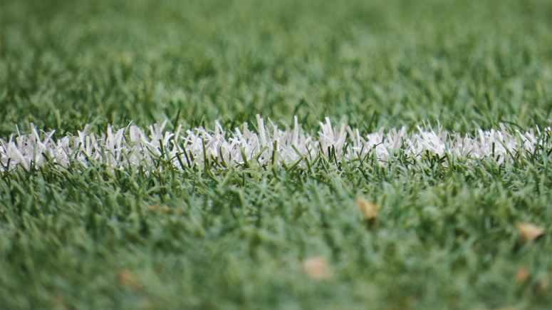 grass grassland