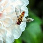 ハチの種類と見分け方は?駆除方法と子供への注意点は?
