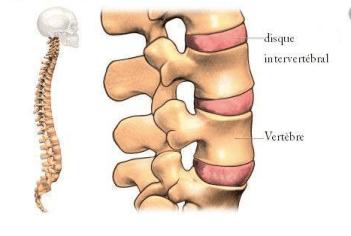 comment-fonctionne-colonne-vertebrale