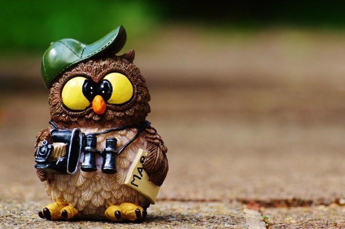 owl-964011_960_720