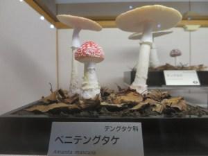 福井県きのこの森