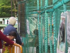 福知山三段池動物園園長さん