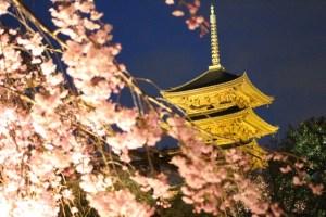京都春のライトアップ 東寺