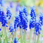 春 青い花