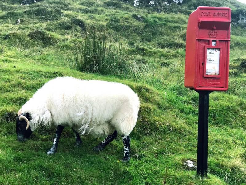Sheep island Skye