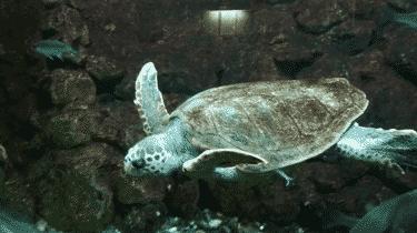 Sea turtle aquarium of Campo