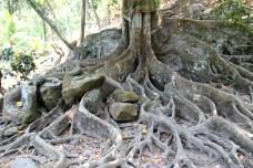 Kořeny obřího stromu