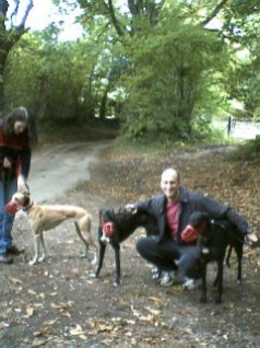 """Dogs from left to right: Becky, """"Alice"""" and Dylan"""