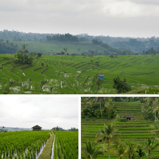 Jatiluwih riziere Bali