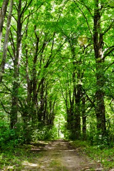 Forest path at rare Charitable Research Reserve