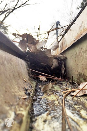 Cleaning Out your gutters