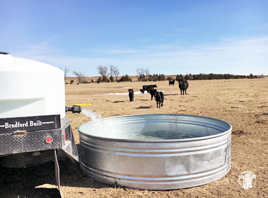 Every spring calving season rolls around, and so does the need for the water truck lady.
