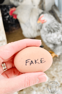 Fake Ceramic Eggs