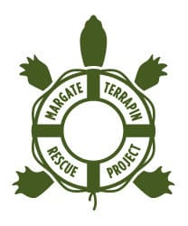 margate terrapin turtle rescue