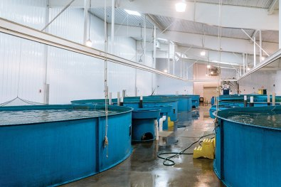pool tanks for fishery