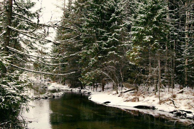 snowy forest and waterway