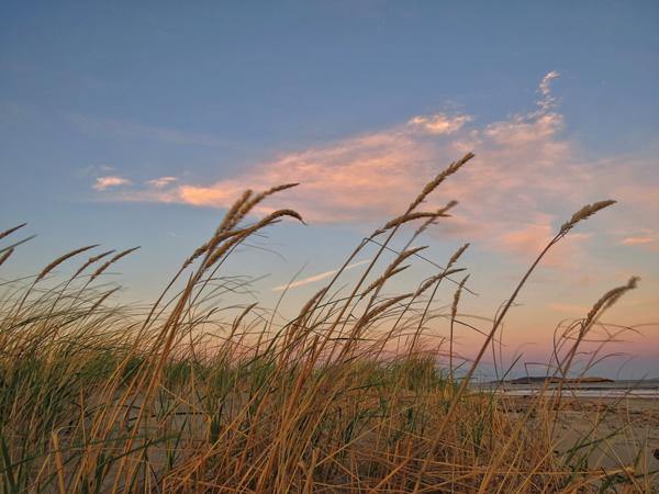 Beach grasses at Popham Beach, where the Kennebec meets the sea.