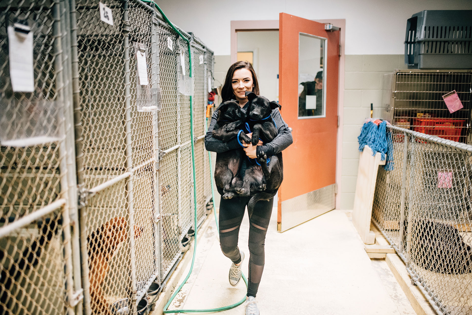 Volunteer Lauren Moffat helps unload dogs at the Kittery Animal Hospital, which shelters strays and offers adoptions.