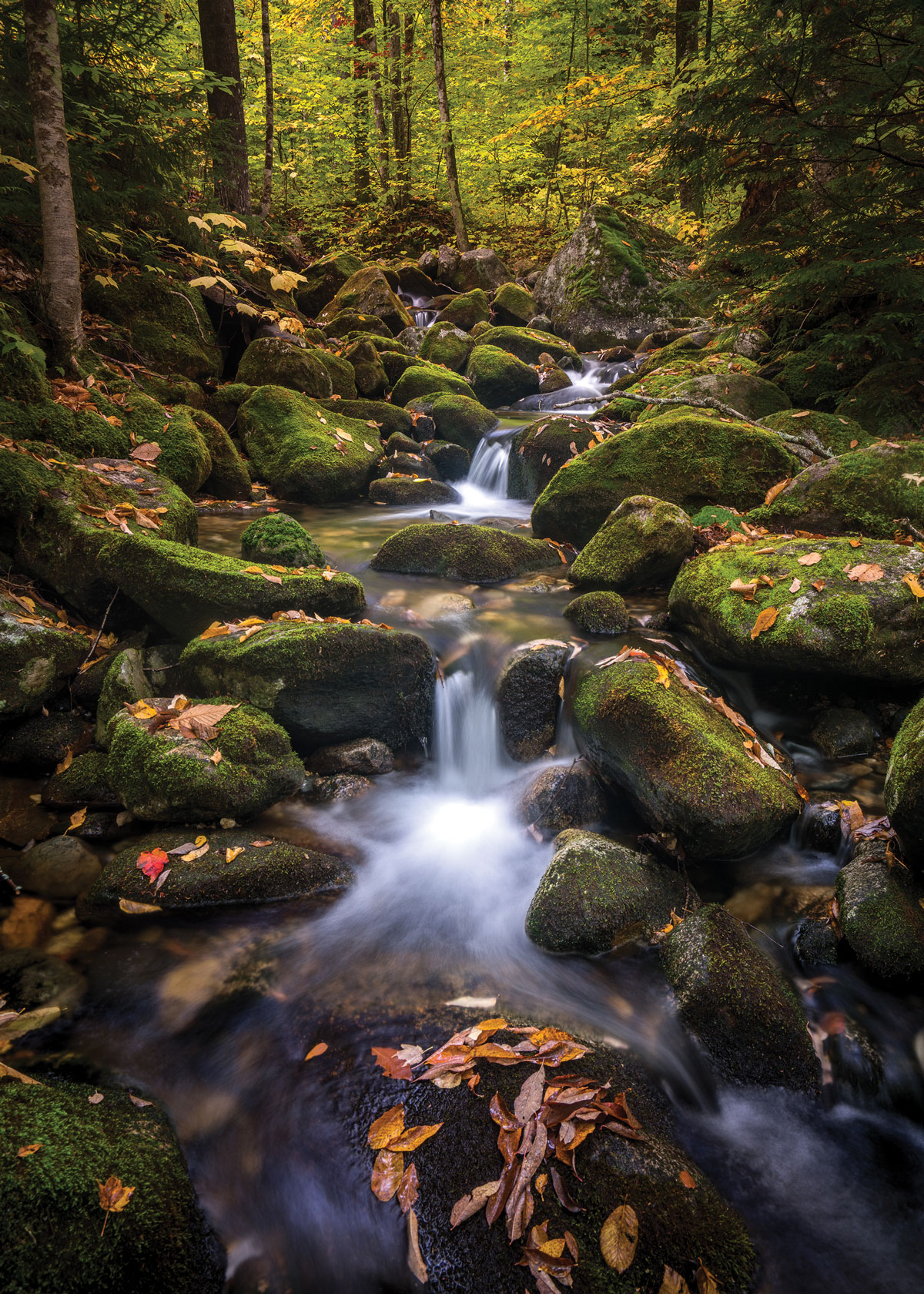 A tumbling stream in Grafton Notch State Park
