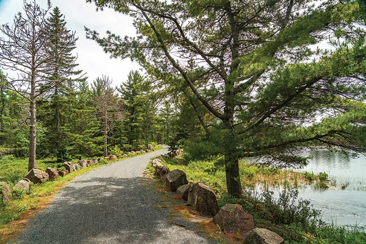 carriage-road ride to Aunt Betty Pond shows off the diversity of the Acadia National Park's low country