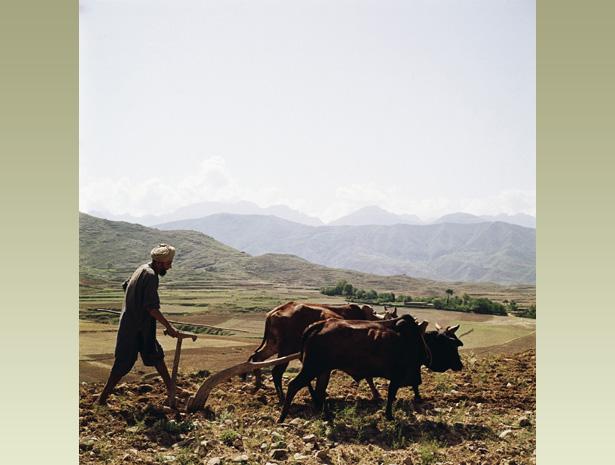 farm ploughing images horses india کیلئے تصویری نتیجہ