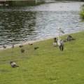Regents Park - 2006