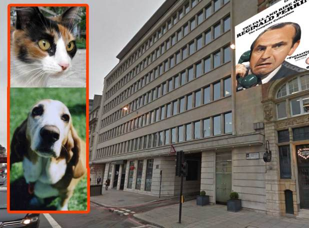 "Fleetway House, with""Bear Alley"" in the foreground. The calico cat and Basset hound images are not mine (sourced from MorgueFile)."