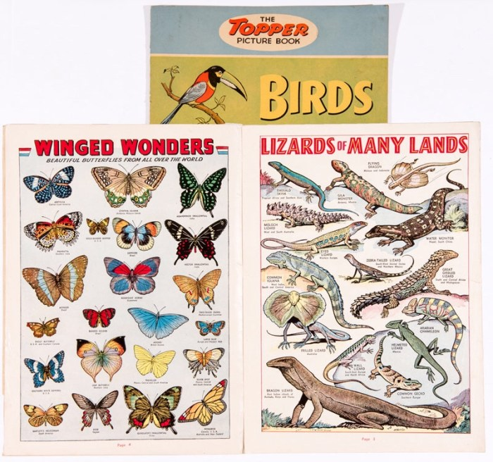 Topper Picture Book 1 (1954). Large format featuring Birds, Beasts, Fishes and Insects