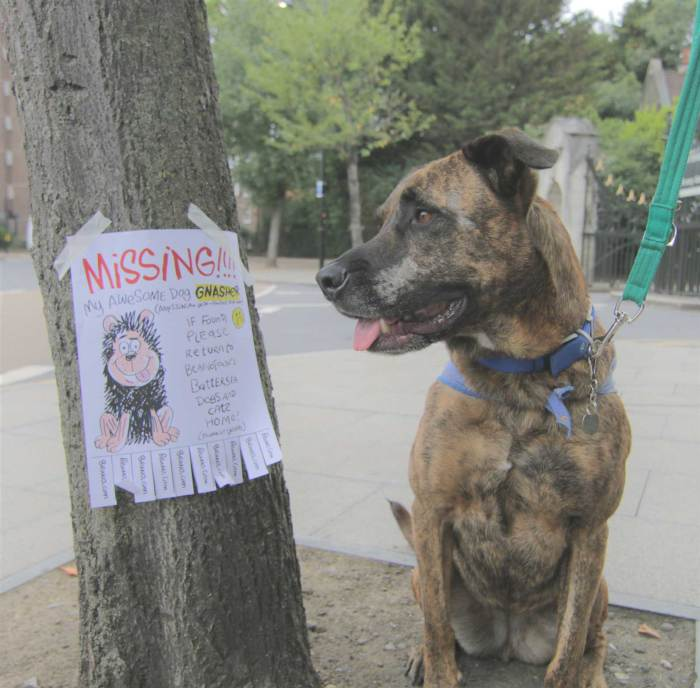 Missing Gnasher 2018