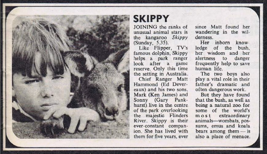 """A short article introducing viewers to """"Skippy the Bush Kangaroo"""" in 1967, from TV World magazine"""