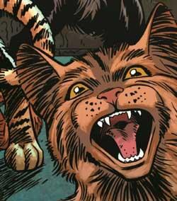Captain Ginger - Cat